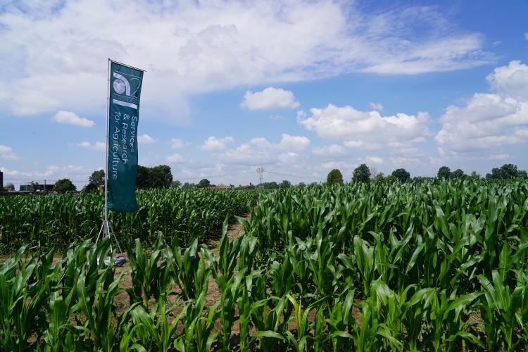 campo-demo-mais-agricola-2000-2020.jpg
