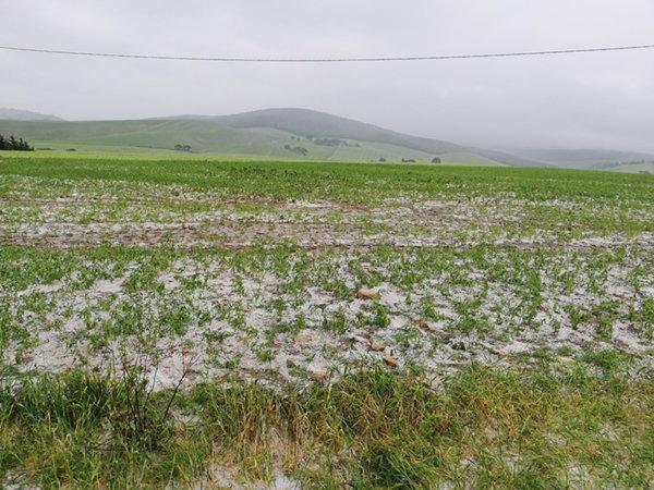 campo-di-cipolle-pieno-di-grandine05mag2018coldirettifoggia
