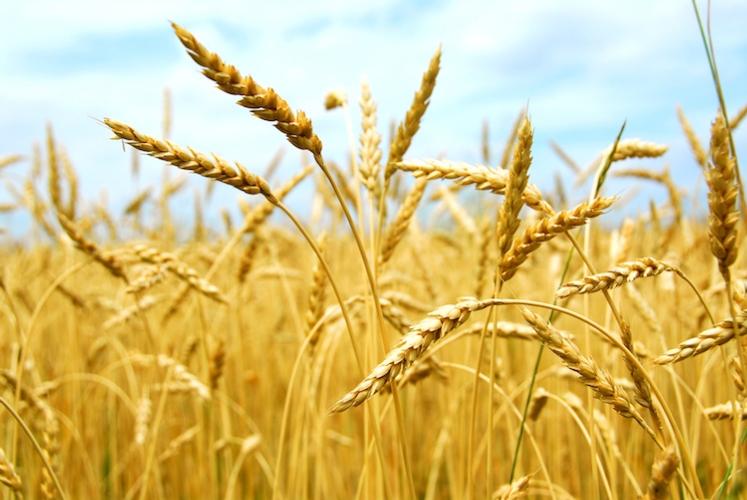 L'agricoltura di precisione riparte dal 5G