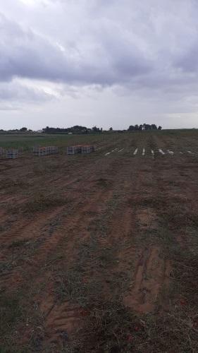 campo-di-pomodori-allagato-fonte-coldiretti-puglia-20200608