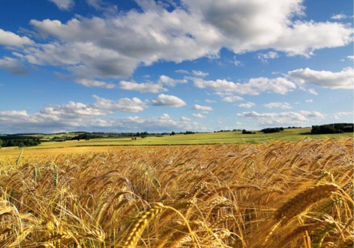 La concimazione in pre-semina del frumento per ottimizzarne la produttività - le news di Fertilgest sui fertilizzanti