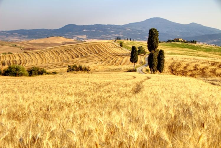 campo-grano-paesaggio-turismo-colline-by-marco-adobe-stock-750x501
