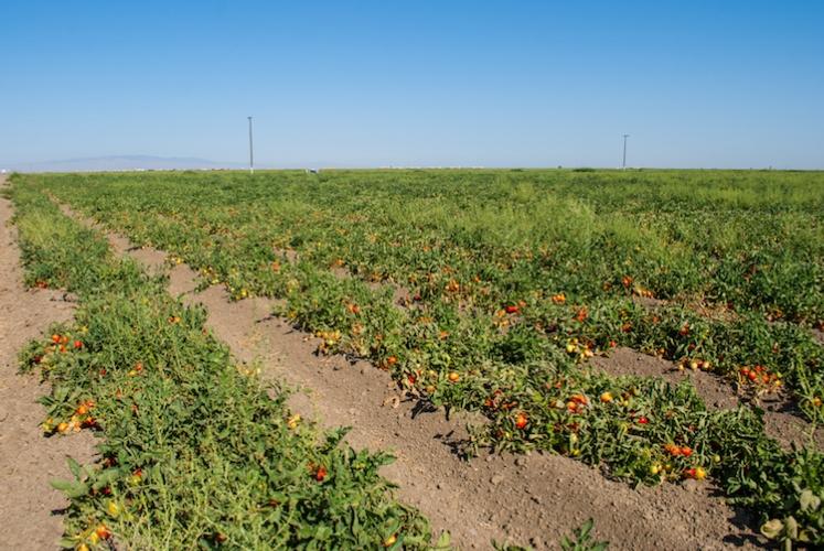 campo-pomodori-by-leonard-fotolia-750.jpeg