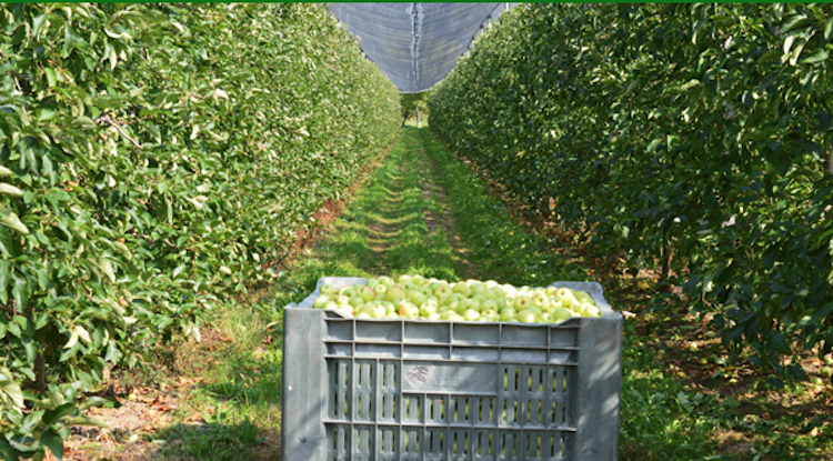 campo-raccolta-mele-preparazione-primavera-redazionale-ottobre-2021-fonte-l-gobbi.png