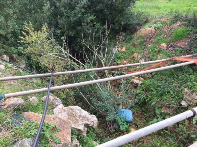 canale-di-bonifica-invasto-da-alberi05feb2018coldiretti-puglia