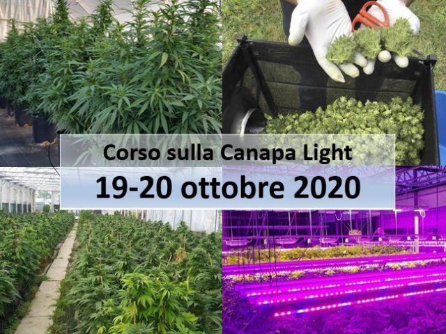 canapa-light-20201019-fritegotto