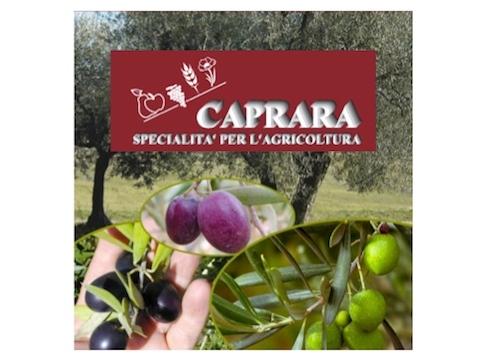 caprara-prodotti-olivo