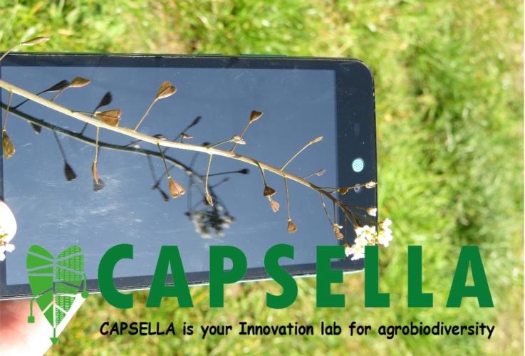 capsella-bursapastoris-smartphone-logo-capsella-by-kal-behnn-scuola-sant-anna-pisa