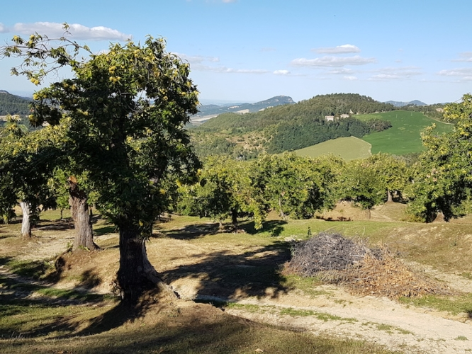 castagno-fonte-isagro