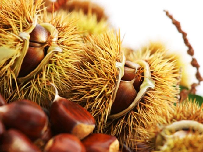 castagno-frutto-istockphoto-zivak