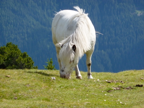 cavallopascolomontagna-ag