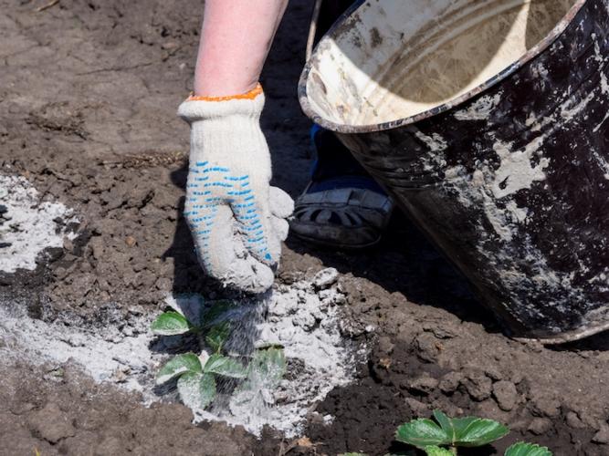 Cenere di legna, otto consigli per l'utilizzo come fertilizzante - le news di Fertilgest sui fertilizzanti
