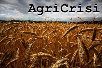 cereali_campo_grano_agricrisi-CoreForce