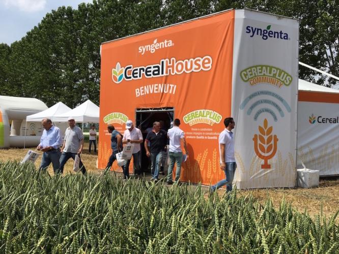 cerealplus-2016-syngenta-cinquemani