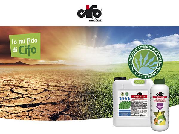 Integre e produttive - le news di Fertilgest sui fertilizzanti