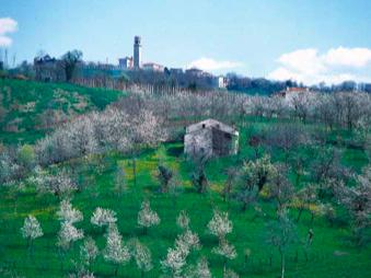 ciliegia-paesaggio-marostica-bylaverda