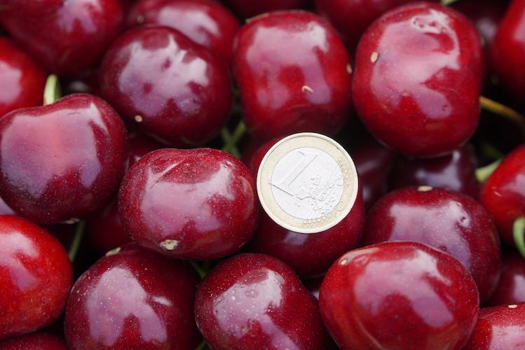 ciliegie-salvi-vivai-202106-by-isabella-sanchi-agronotizie