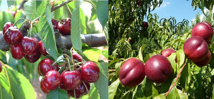 Leasulf, zolfo e azoto organico - le news di Fertilgest sui fertilizzanti