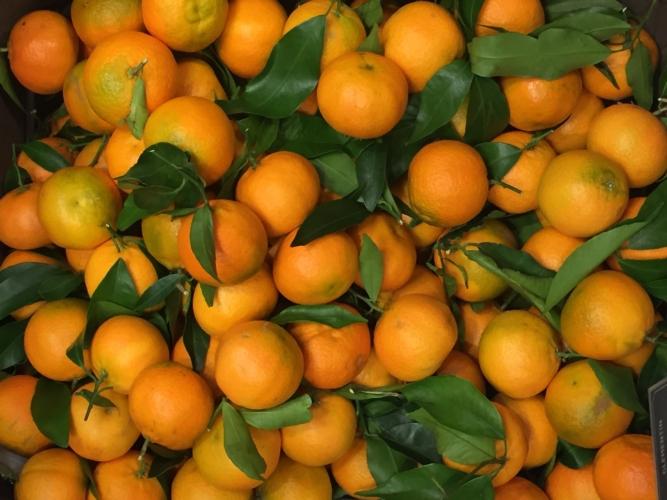 clementine-fonte-confagricoltura-20210120.jpeg