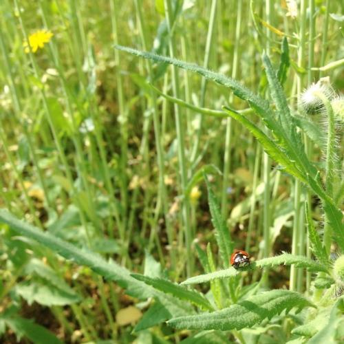 coccinella-ambiente-natura-by-cristiano-spadoni-agronotizie.jpg