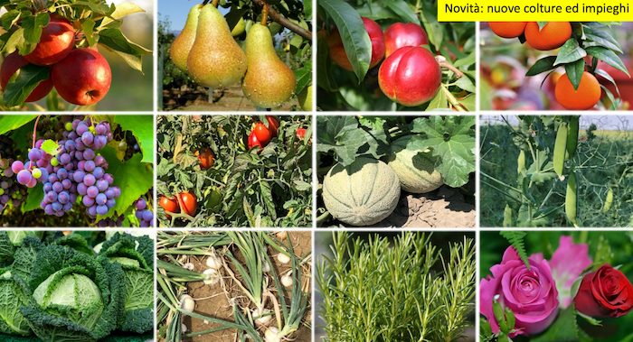 collage-frutta-verdura-ornamentali-prev-am-plus-gennaio-2021-fonte-nufarm