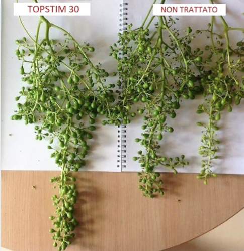 Adriatica ha la soluzione per uniformare fioritura, allegagione e pezzatura - le news di Fertilgest sui fertilizzanti