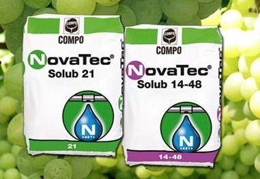 compo-expert-novatec-uva-tavola