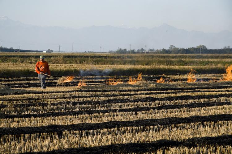 contadino-che-brucia-le-stoppie-residui-vegetali-rifiuti-by-fabio-principe-adobe-stock-750x500