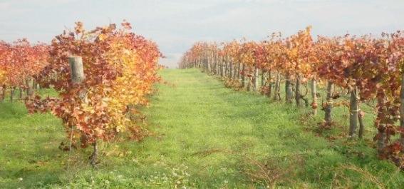 convegno-agricoltura-biologica-23-novembre-2012