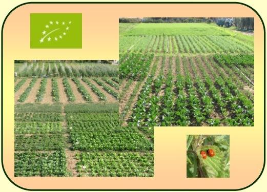 convegno-rotazione-orticole-agricoltura-biologica-cra-maggio-20101