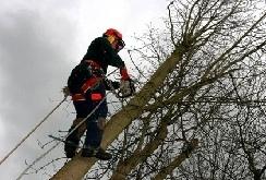 corsi-tree-climbing-alberi-fondazione-mach-2012-2013