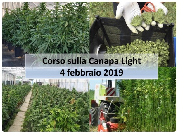corso-canapa-light-20190204