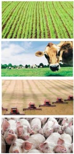 corso-controlli-ammendanti-fertilizzanti