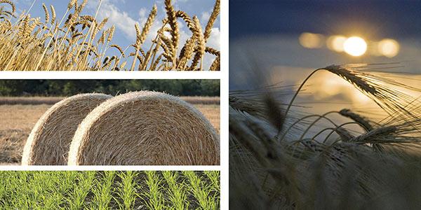 corteva-linea-cereali-2019.jpg