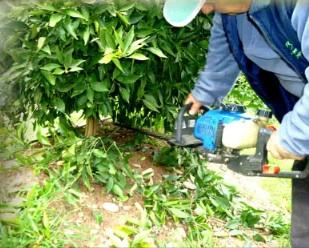covil-potatura-agrumi-marzo2012