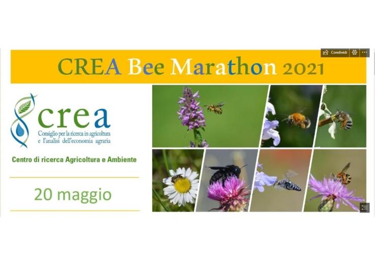 crea-bee-marathon-by-crea-jpg.jpg