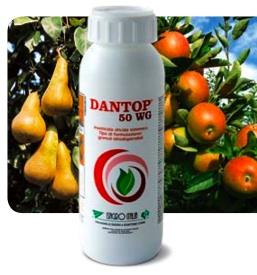 dantop-50-wg-isagro-italia-aficida-melo-pero