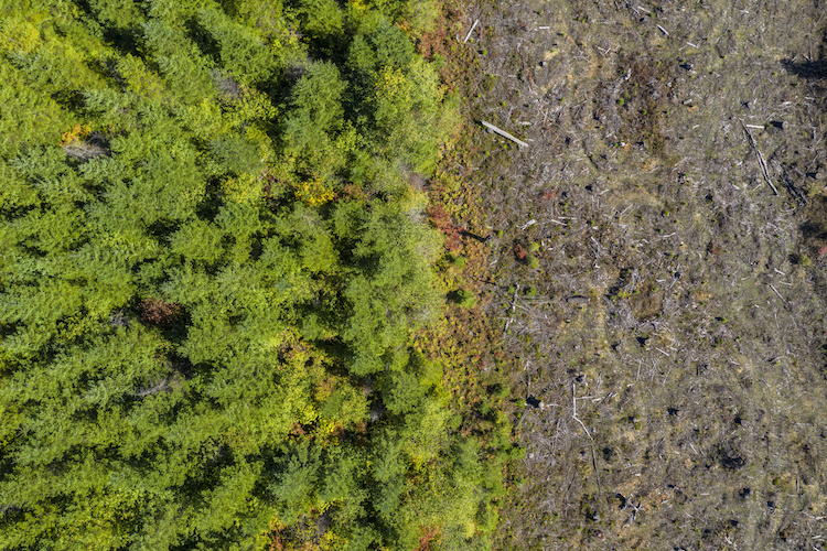 deforestazione-ambiente-foresta-bosco-alberi-vista-drone-by-ink-drop-adobe-stock-750x500