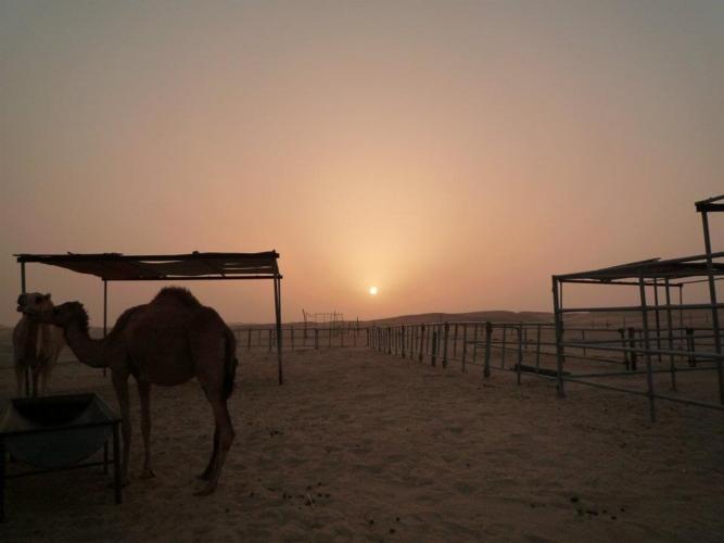 deserto-cammello-dromedario-medio-oriente-meteogest