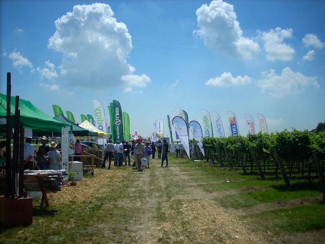 enovitis-in-campo-2010-ca-tron-vigneto-viti-viticoltura-by-agronotizie