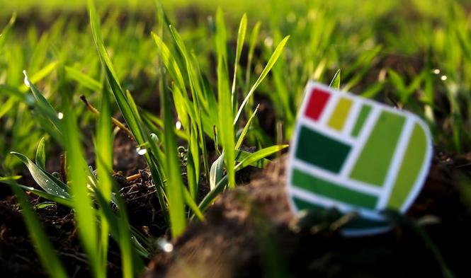 erba-coltura-fertilizzanti-fonte-fomet