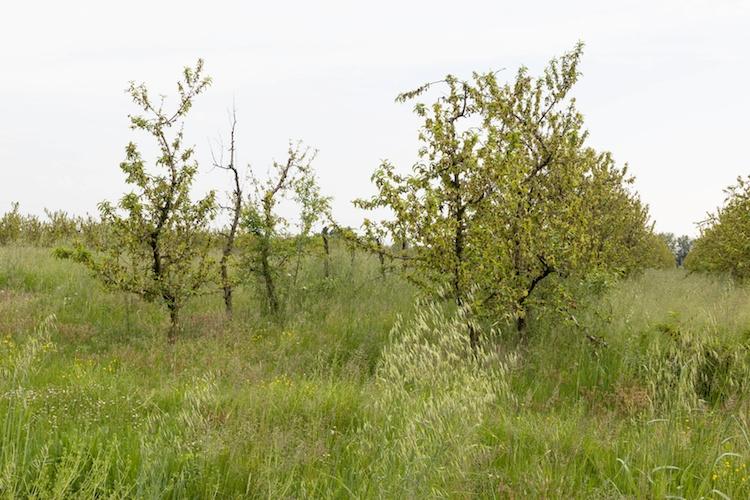 erbacce-colture-erbacee-by-mfabio-fotolia-750