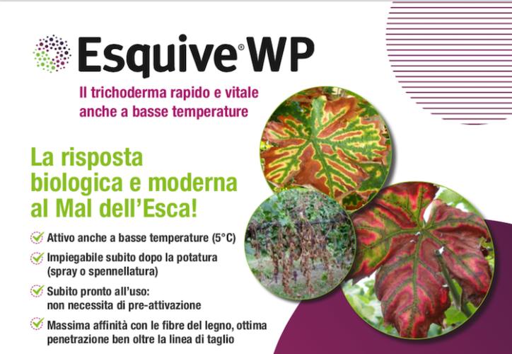 esquive-wp-fonte-sumitomo.png