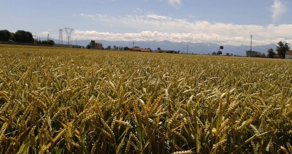 eurochemagro-5-settembre-fertilizzazione-grani