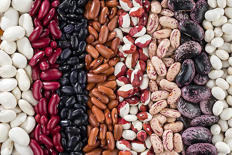 fagiolo-fagioli-seme-leguminosa-legume-pianta-byvladk213-adobestock-750x500