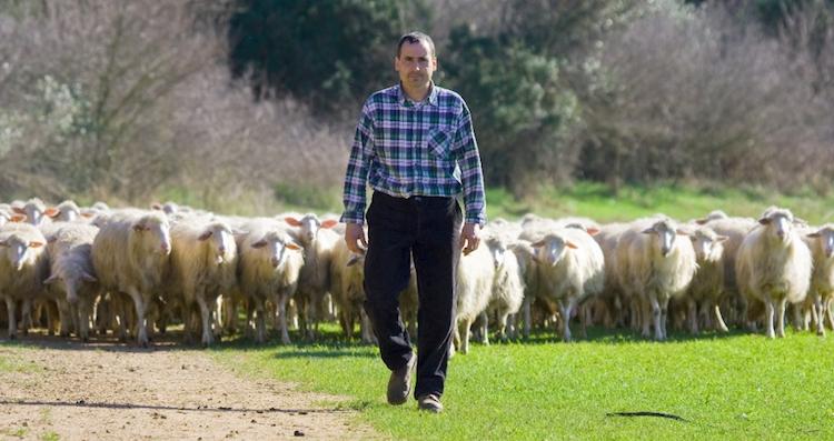 farina-luigi-pastore