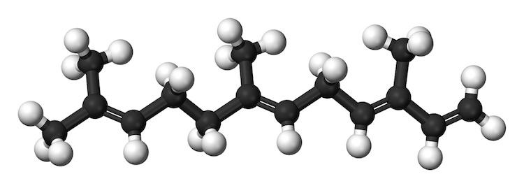 farnesene-molecola-primo-art-mag-rosato-fonte-creative-commons-da-wikipedia