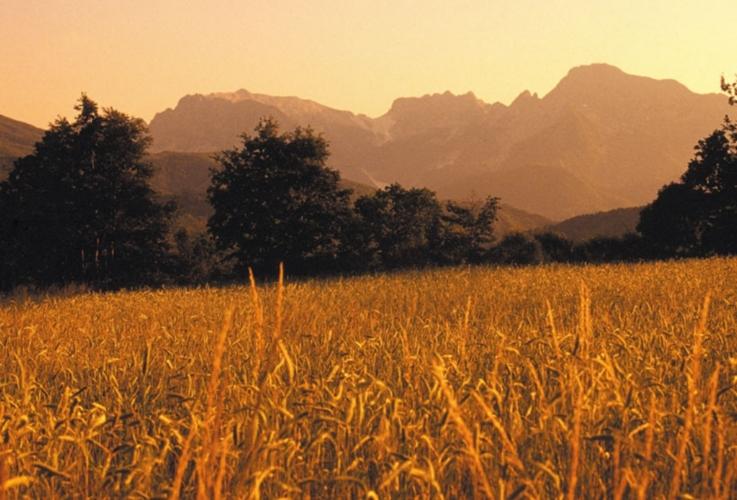 farro-garfagnana-paesaggio-montagna-cereali-by-coop-garfagnana-jpg.jpg