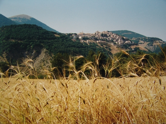 farro-monteleone-di-spoleto-mar-2019-fonte-azienda-agricola-cicchetti