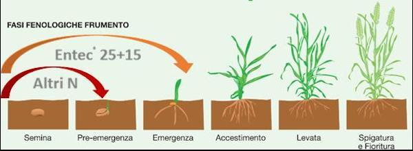 fasi-fenologiche-fonte-eurochem-agro.jpg